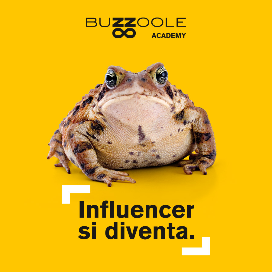 Buzzoole Influencer Academy